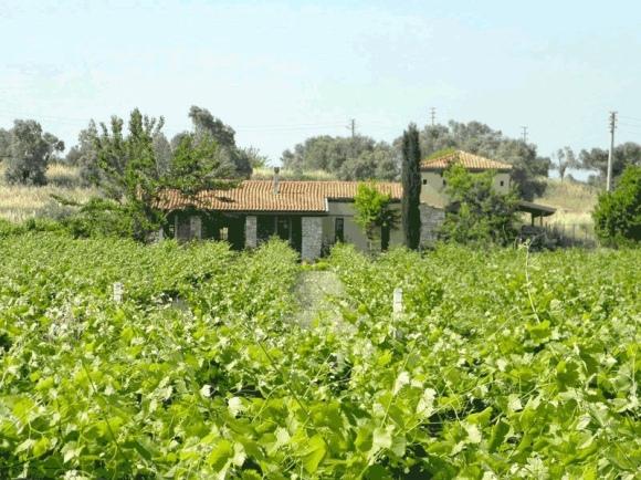 Urlice Winery